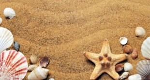 Muscheltausch - eine tolle Campinggeschichte