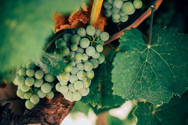 Weinregion Deutschland für viele Camper ein beliebtes Ziel im Inland