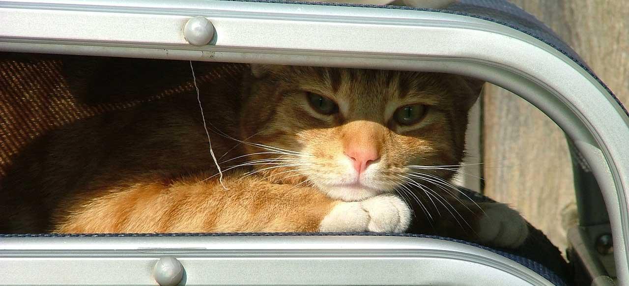 Ratgeber: Camping mit Katze
