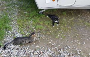 Kontakt mit anderen Fellnasen ist beim Camping mit Katze meistens vorprogrammiert.