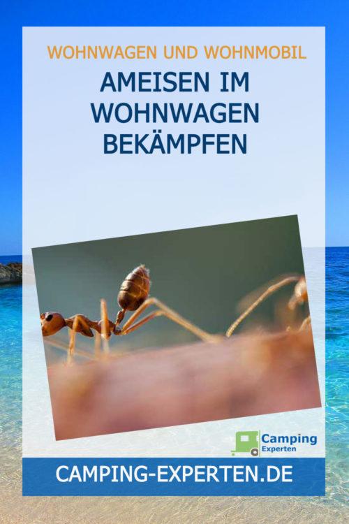 Ameisen im Wohnwagen bekämpfen