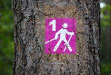 Bild von Das Nordic Walking als Freizeit- und Sportbetätigung beim Campen